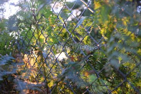 zaun draht hintergrund baeumen park garten