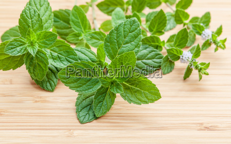 closeup fresh peppermint leaves and peppermint