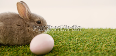 easter eggs and easter bunny in