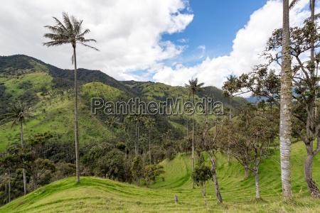 landscape in quindio colombia