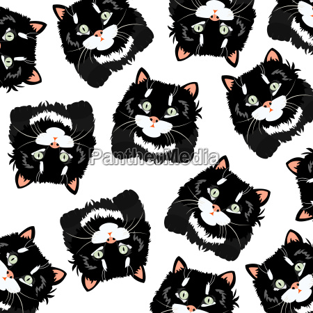 black cats on white background