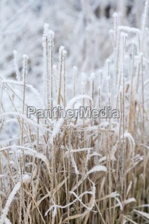 schneeflocken und eiskristalle auf herbstlaub