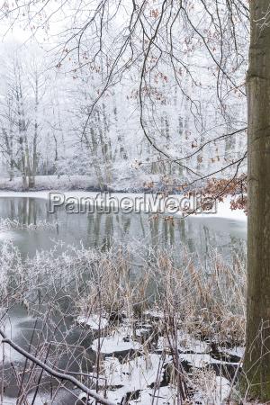UEberfrorener see im winterwald