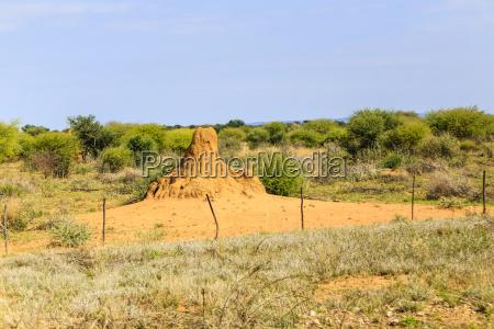 termitenhuegel in namibia