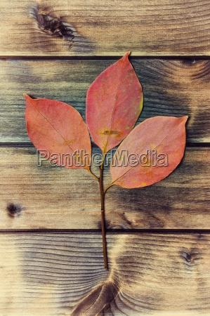 blatt baumblatt blaetter trocken ausgedorrt trocknen