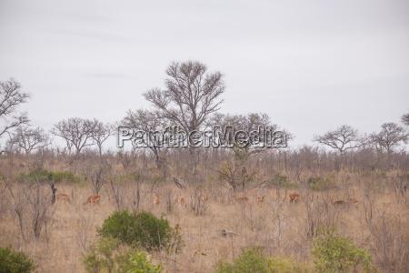 landschaft in suedafrika