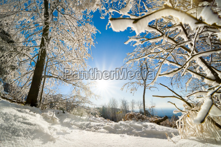 sunny winter landscape with sun snow