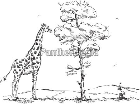 zeichnen tier giraffe