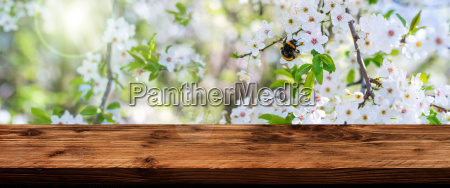blossoms, in, spring, with, wooden, table - 23508620