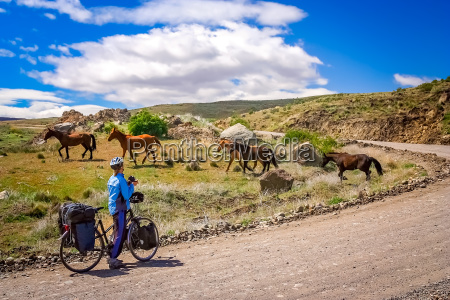 cyclist encounter with wild horses in