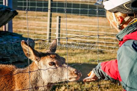 cyclist feeding young deer through the