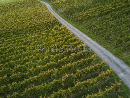 aerial view over vineyard fields in