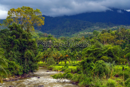 jungle river in indonesia