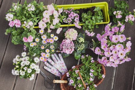 various pink blooming potted plants on
