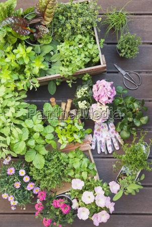 verschiedene gewuerzpflanzen und bluehende topfpflanzen auf