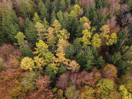 germany bavaria fuerstenfeldbruck beech forest in
