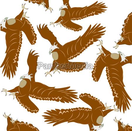 tier vogel fauna wild adler gefraessig