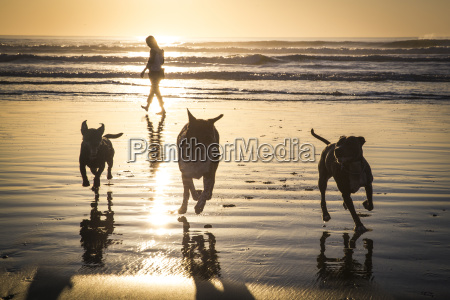three dogs playing on beach at