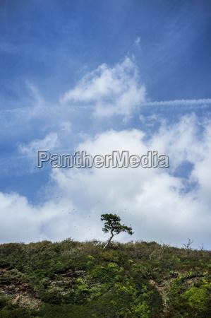 baum anhoehe huegel wolke outdoor freiluft