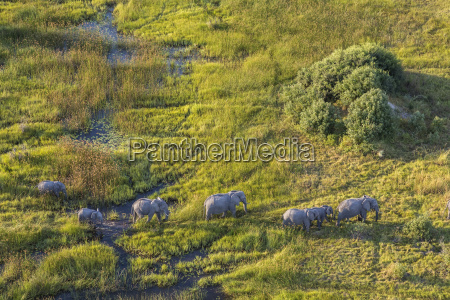 aerial view of herd of african