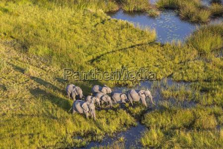 fahrt reisen tier nationalpark afrika elefant
