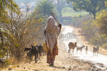 rear view of woman wearing sari
