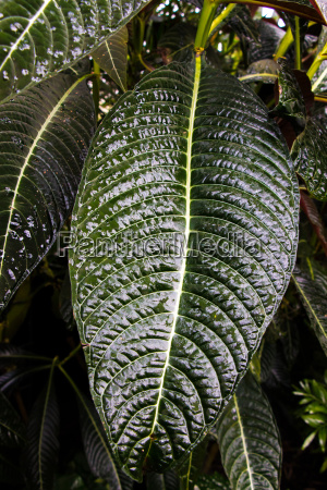 big green leaf with forest in