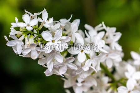 white flowers and green leaves on