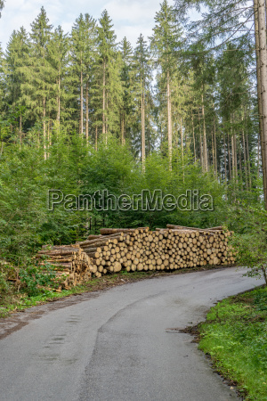 coniferous forest with forest path and