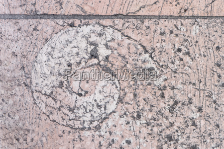 ammonite in a pink pavement in