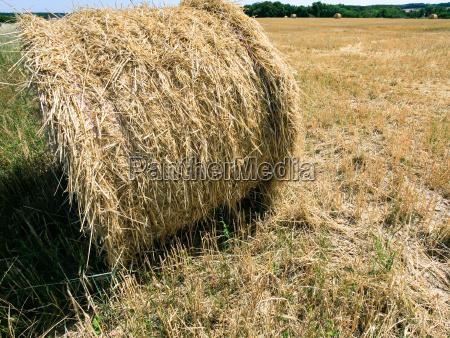 bale of straw on hay field