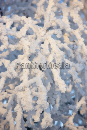 close up of hoar frost on