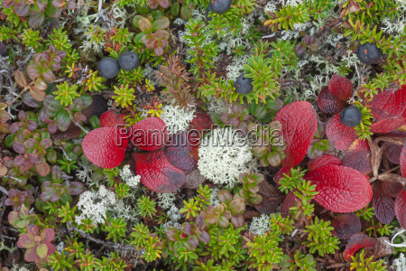 maco shot of colorful tundra plants