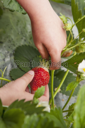 detail of childs hand picking organiclly