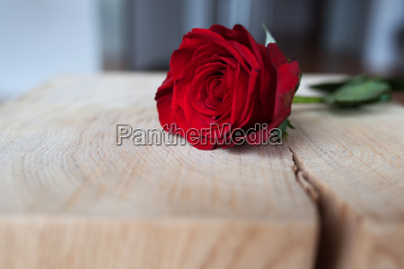 beautiful red rose on rustic wood