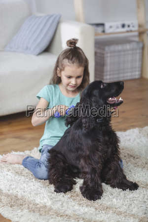 girl brushing cocker spaniel hair in