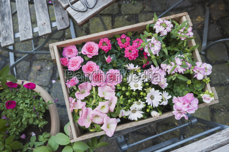 gardening planting of summer flowers wooden