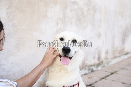 portrait of dog stroked by owner