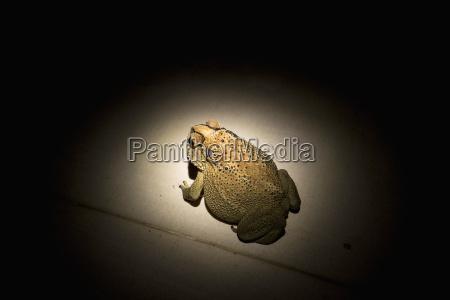 amphibie beton horizontal fotografie photo foto