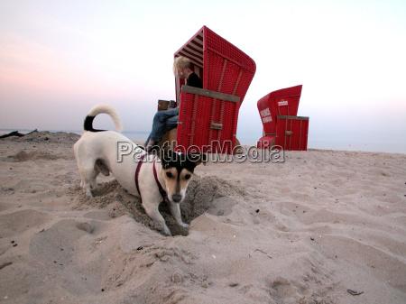 romantic animals pets beach seaside the