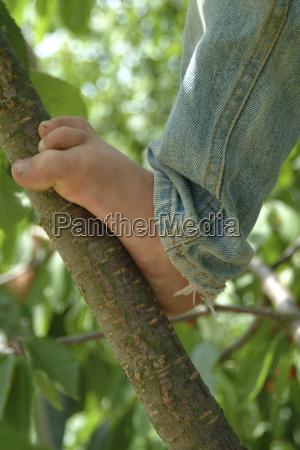 kind auf kirschbaum
