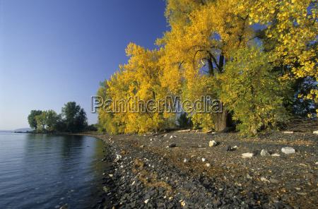 autumnal colored trees on isle la