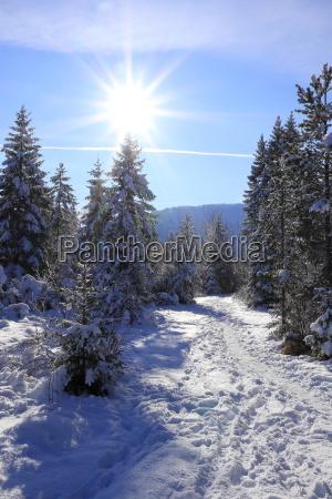 schneespuren in winterlandschaft