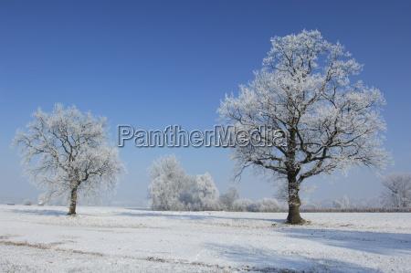 winterlandschaft mit raureif