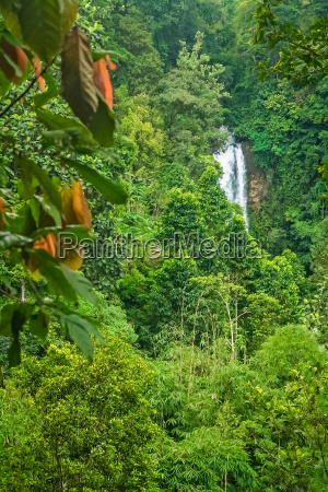 small waterfall in the dense jungle