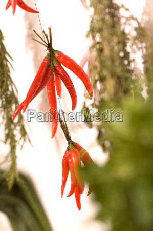 rote pepperoni aufgehangt an einer schnur