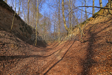 hollow path in the loess