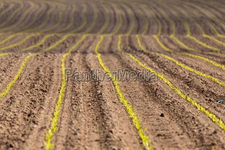spring plowed field curves
