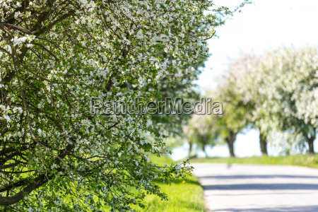 road with tree in bloom