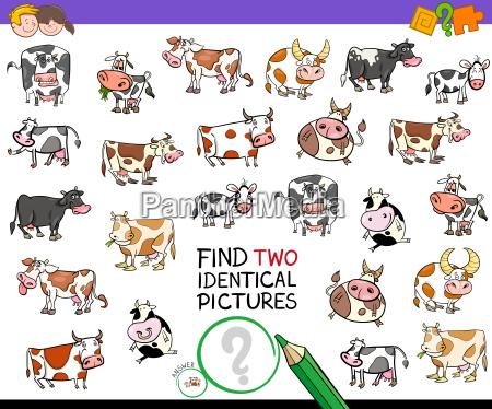 finde zwei identische kuehe bildungsaktivitaet